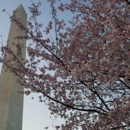 Bauer in D.C. Fellows Share Their March Experiences